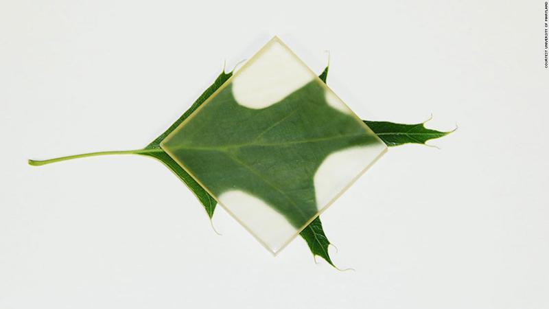 madera transparente