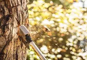La UE introduce controles de importación ilegal de madera