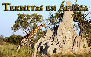 Las termitas, ciclo de vida en África