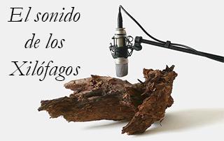 Los sonidos de los Xilófagos