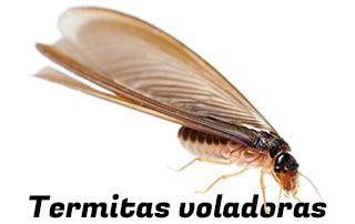 Emergen las termitas voladoras