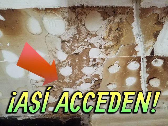 Cómo acceden las termitas subterráneas